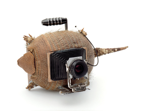 TaiyoOnorato_NicoKrebs_2 Art Cameras Fashioned from Turtles, Armadillos, Horns and Books