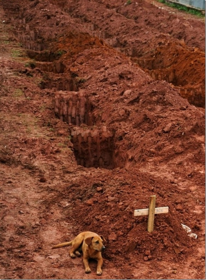 A dog called Leao is lying near its owner`s grave. The man died in the landslides. Rio de Janeiro, January 15, 2011