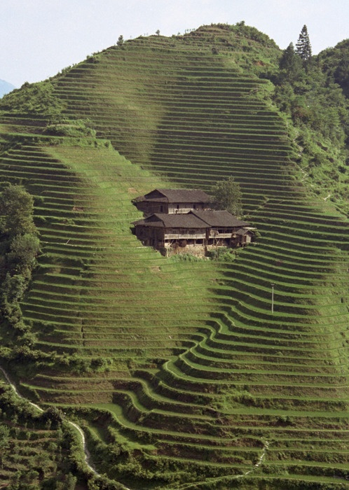 Farm terracing japan alk3r for What is terracing