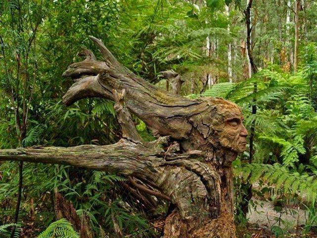 Awesome carving on a downed tree