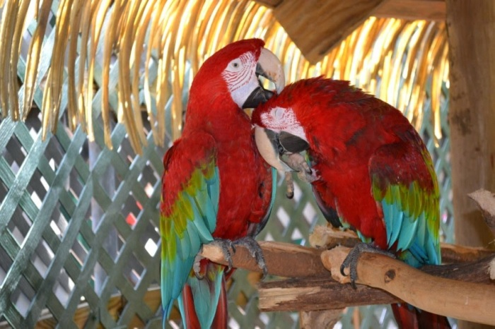 Colourful Parrots 11