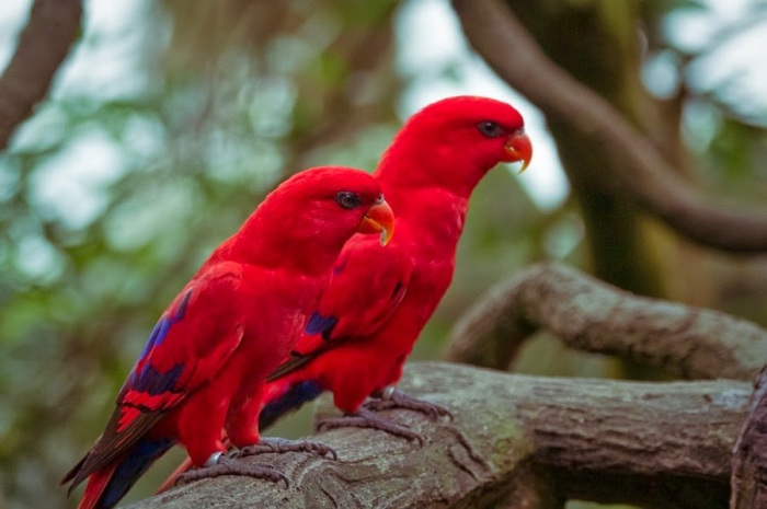 Colourful Parrots 12