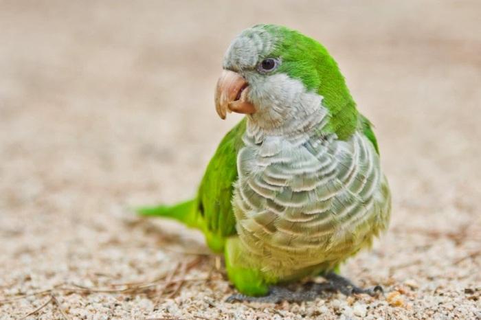 Colourful Parrots 2