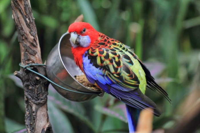 Colourful Parrots 3