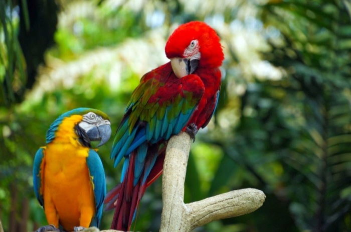Colourful Parrots 4