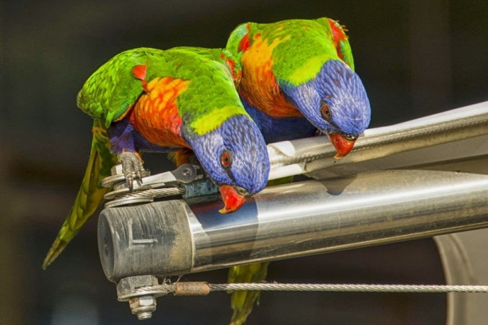 Colourful Parrots 9