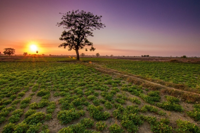 Sunset Upon the Fields by Theik Htun Aung