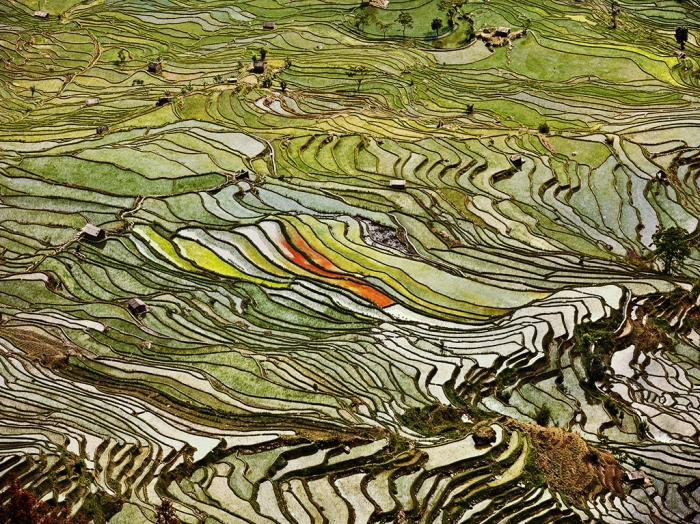 Rice Terraces, Western Yunnan Province, China