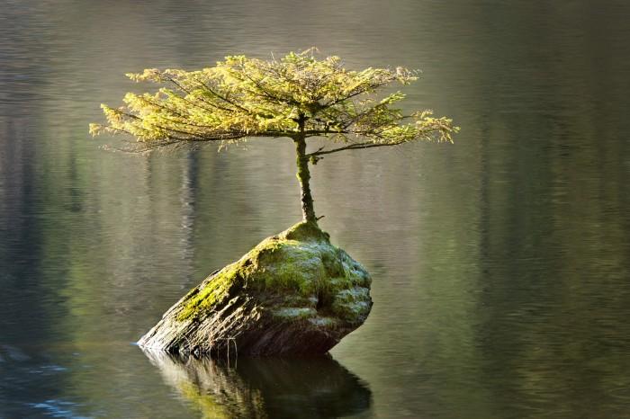 Tree Growing On A Log by ian beveridge