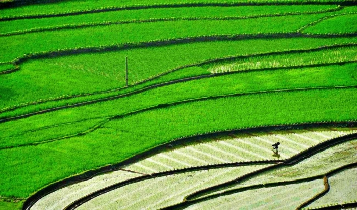 A farmer plants in a paddy on a terraced field in Suichuan county, Jiangxi province, China