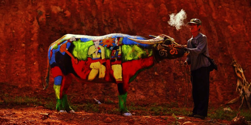 A man smokes as he waits with his painted buffalo before a buffalo bodypainting competition in Jiangcheng county, Yunnan province, China