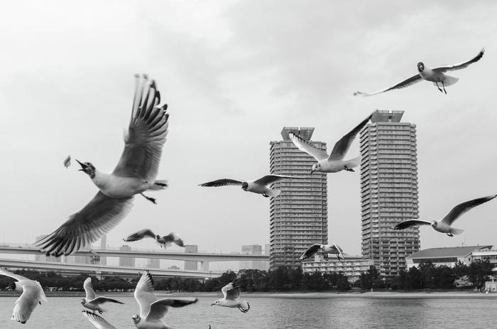 White Birds In Flight