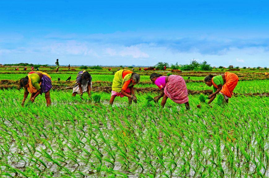 Women-Farmers.jpg