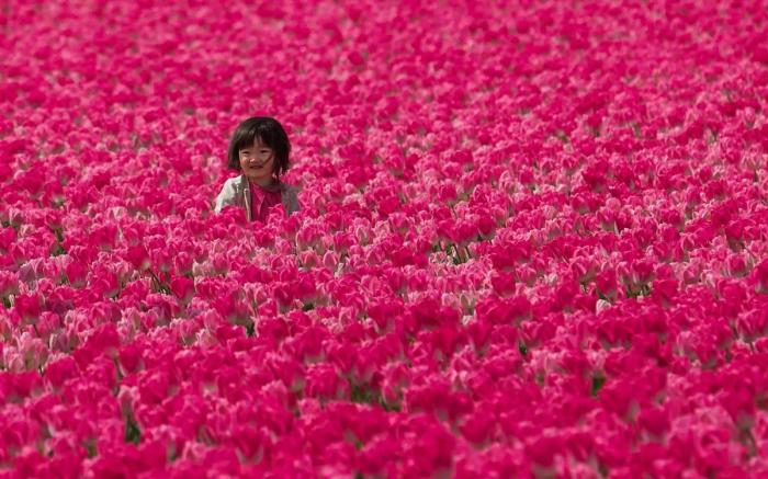 Girl in the tulip fields, Holland