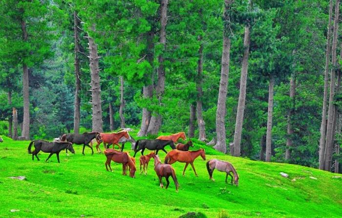 Heaven on Earth! Kashmir Valley in Pakistan (7)