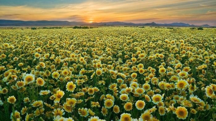 Sunflowers-as-an-Inspiration