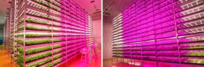 Worlds-Largest-Indoor-Farm-DESIGNRULZ-1