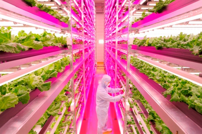 Worlds-Largest-Indoor-Farm-DESIGNRULZ-4