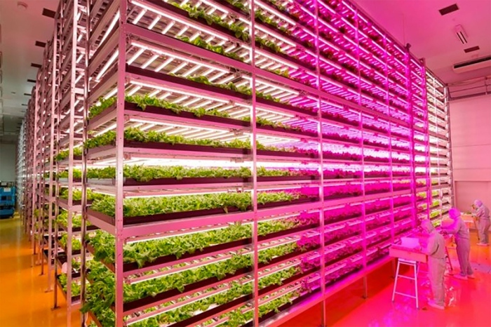 Worlds-Largest-Indoor-Farm-
