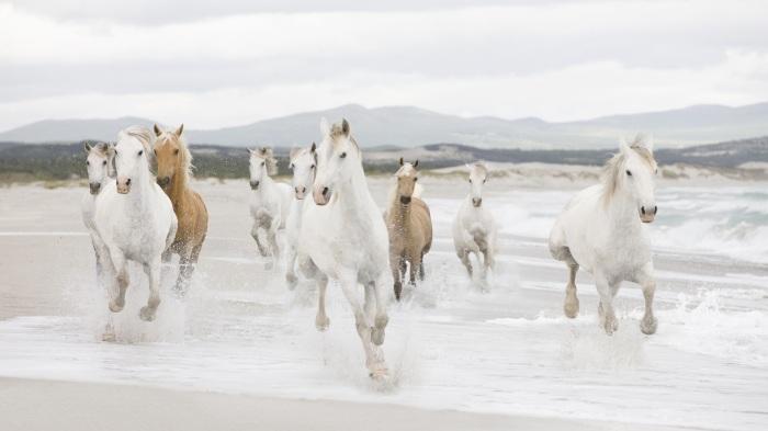 White Horses Running Alk3r