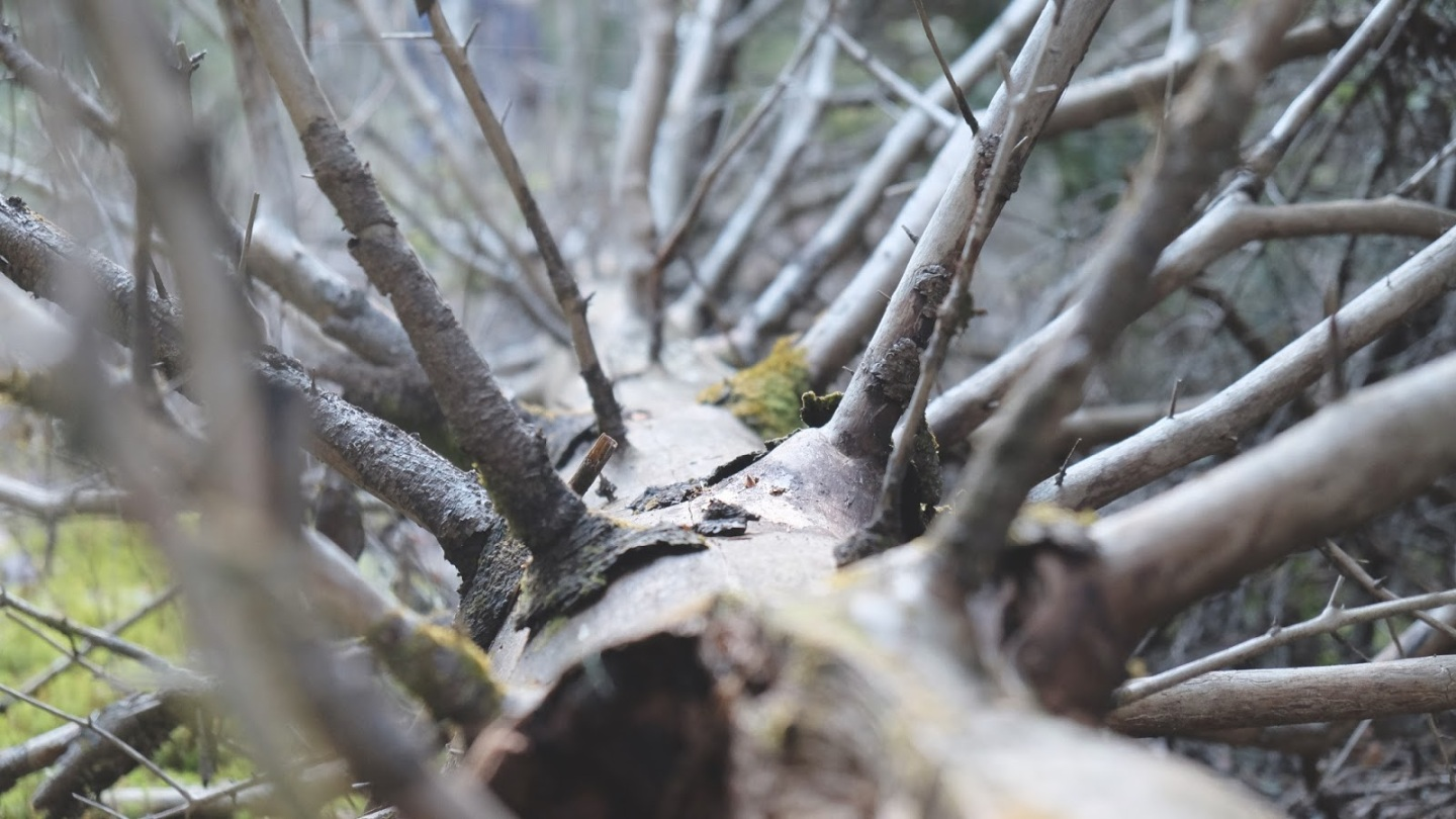 5c7f7-2016_02_life-of-pix-free-stock-photos-forest-branches-trees-juliensister1