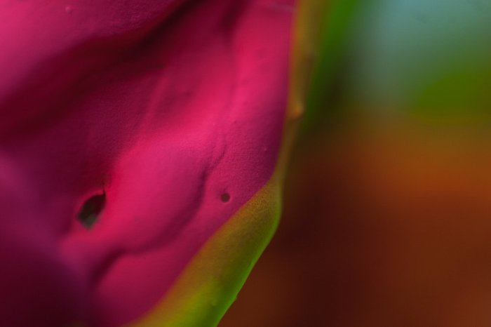 colour-alberto-seveso4.jpg